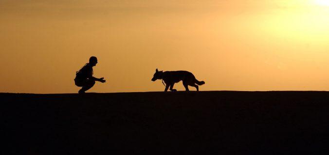 Choisir un chat à un chien comme animal de compagnie.